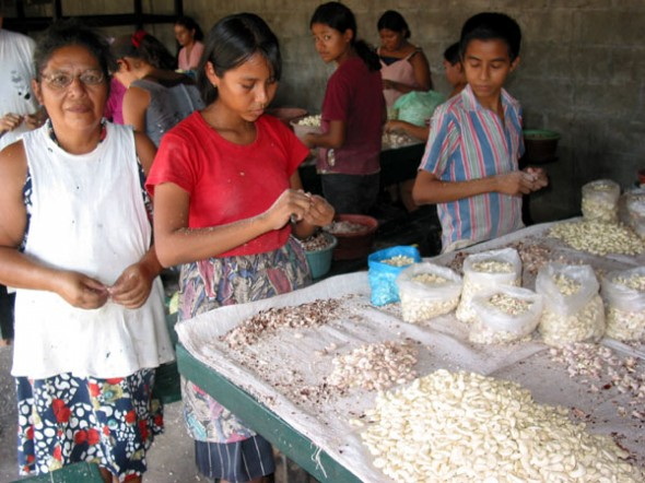 Cashew Production Line